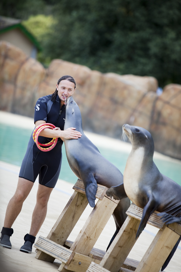sealions-and-trainer