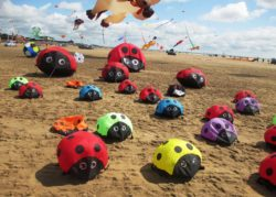 Ladybirds-at-Kite-Festival